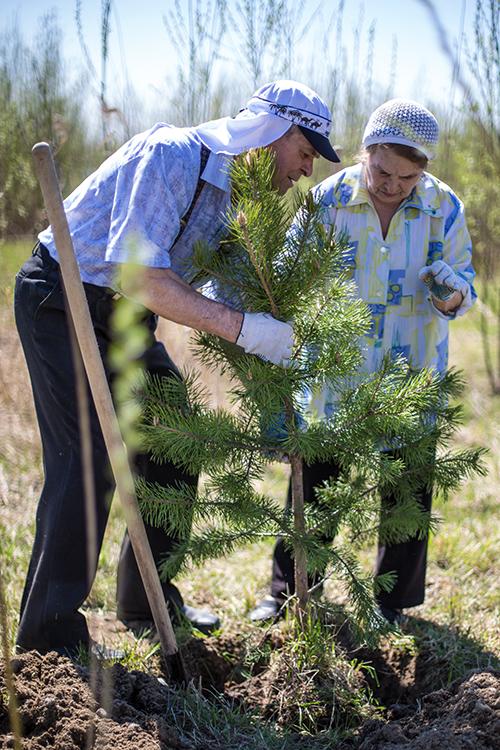 Высадили деревья памяти